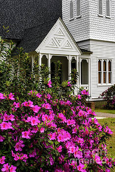Azalea Blooming Summerville Presbyterian Church by Thomas R Fletcher