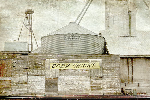 Baby Chicks Feed and Seed Store by Ramona Murdock