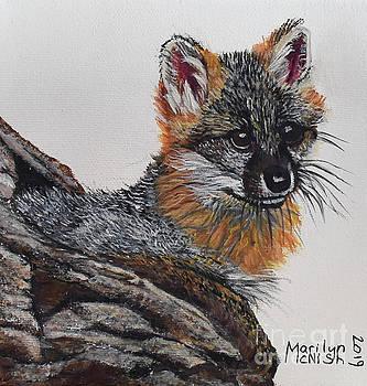 Baby Grey Fox by Marilyn McNish