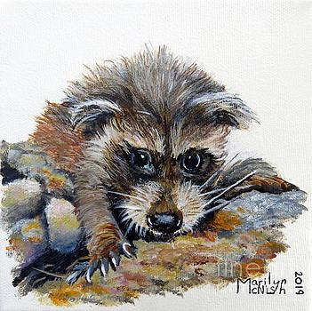 Baby Raccoon by Marilyn McNish
