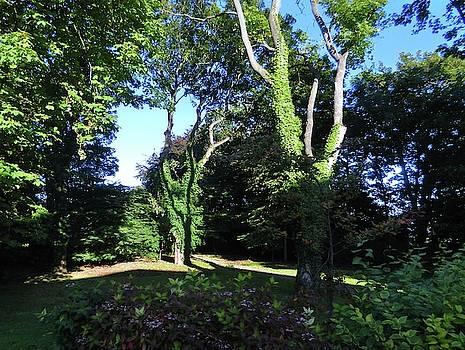 Back Garden in the Morning by Nik Watt