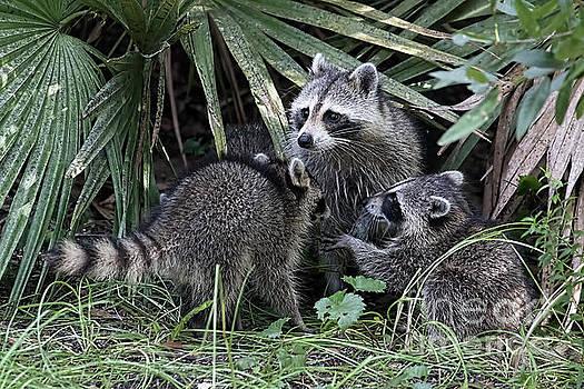 Backyard Family by Deborah Benoit