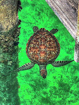 Bahama Sea Turtle by Donna Kennedy