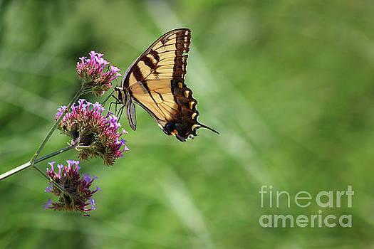 Balancing Butterfly by Karen Adams