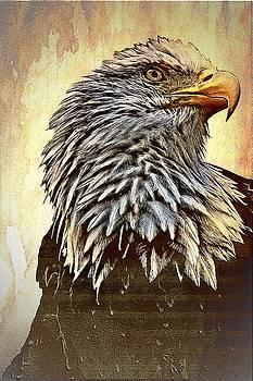 Bald Eagle by Aaron Berg