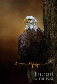 Bald Eagle at Sunset by Warrena J Barnerd