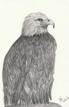 Bald Eagle by Martina Fagan