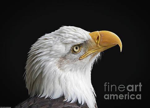 Bald Eagle Portrait 8 by Mitch Shindelbower
