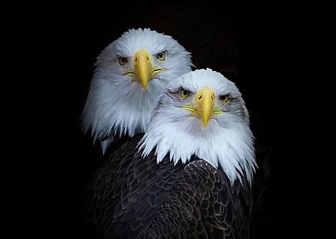 Bald Eagles Portrait 2 by Ernie Echols