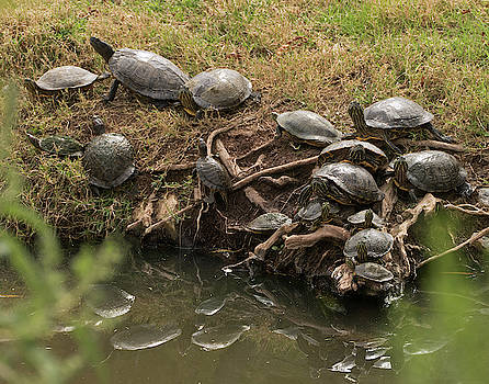 Bale of Turtles by Laurel Powell