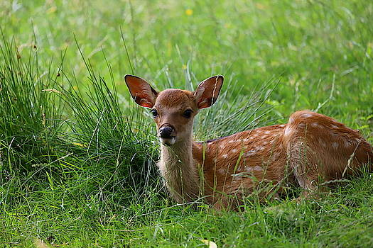 Bambi 5 by Heike Hultsch