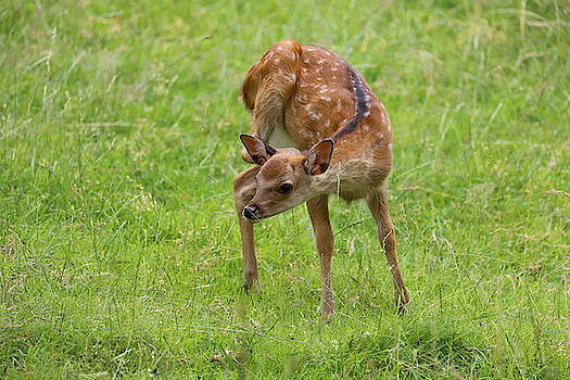 Bambi 8 by Heike Hultsch