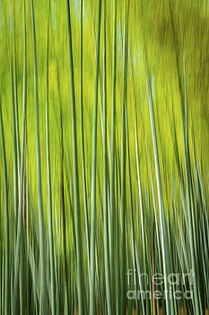 Bamboo Blur by Paul Woodford