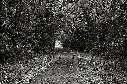 Bamboo Cathedral I by Trinidad Dreamscape
