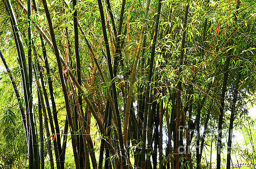 Bamboo forest by Del Art