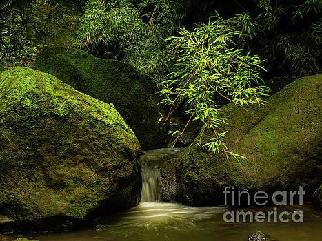 Asia Visions Photography - Bamboo Waterfalls