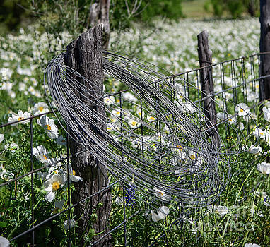Barbed wire and poppies by Paul Quinn