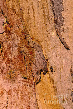Bark Art Natures Gum by Joy Watson