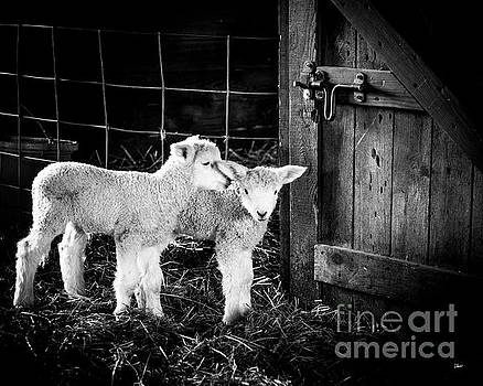 Barn Friends by Alana Ranney