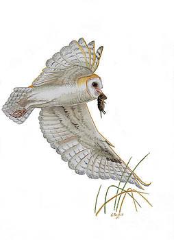Barn Owl in Flight by Scott Rashid