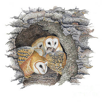 Barn Owls in cliff nest by Scott Rashid