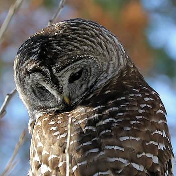 Barred Owl Close Up by Doris Potter