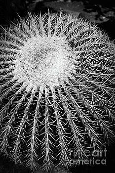 Barrel Cactus Black and White by Edward Fielding