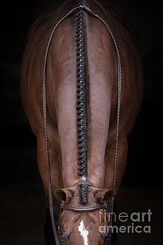 Bay Braids by Terri Cage