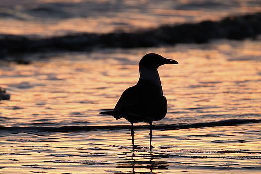 Beach Bird by Chris Dahl