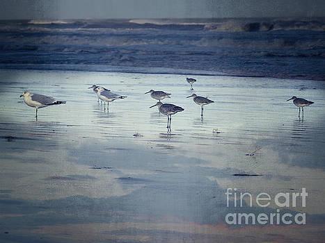 Beach Birds by Ella Kaye Dickey