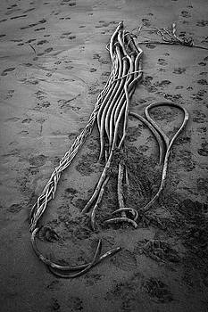 Beach Bones 3 by Peter Tellone