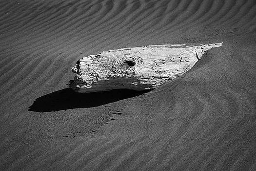 Beach Bones 4 by Peter Tellone