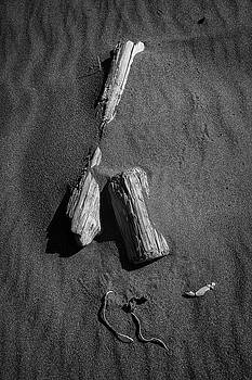 Beach Bones 9 by Peter Tellone