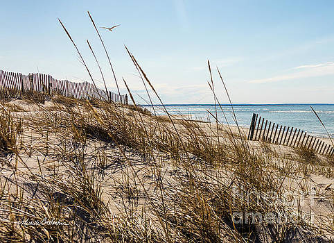 Michelle Constantine - Beach Fence Cape Cod