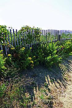 Sharon Williams Eng - Beach Fence Shadows 300