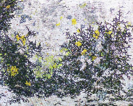 Sharon Williams Eng - Beach Scrub Abstract 300