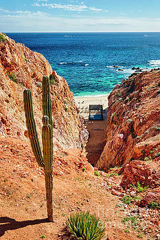 Beach View with a Saguaro by George Oze