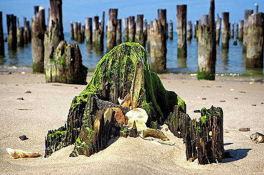 Beached Walrus at Cape Charles Virginia by Bill Swartwout Fine Art Photography