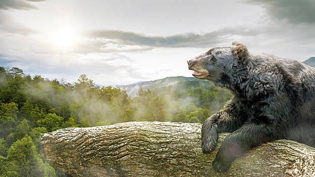 Susan Schmitz - Bear in Tree at Smoky Mountains Park