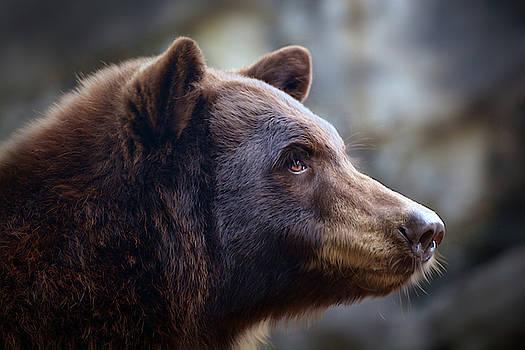Bear Portrait by Savannah Gibbs