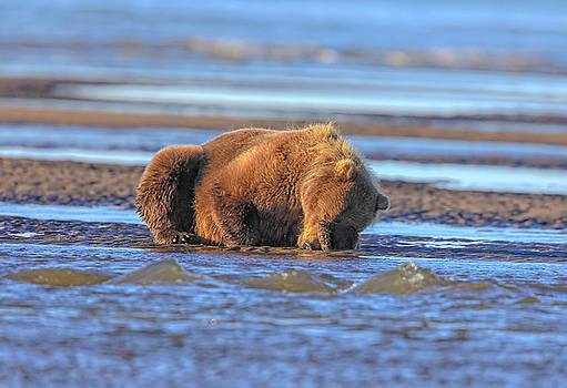 Bear Time by Leigh Lofgren