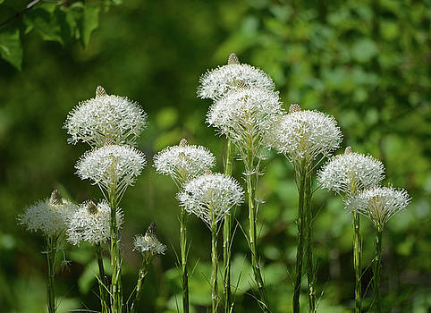 Beargrass Bouquet by Whispering Peaks Photography