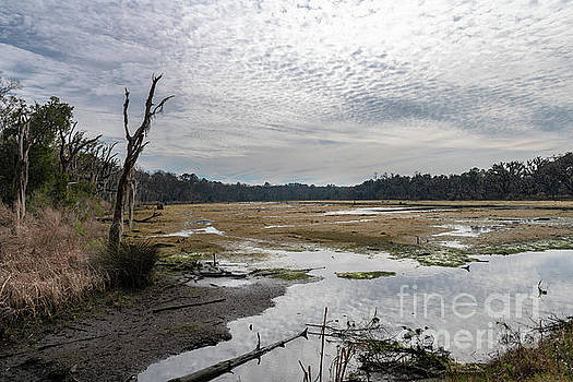 Beaufort Country Salt Marsh by Dale Powell