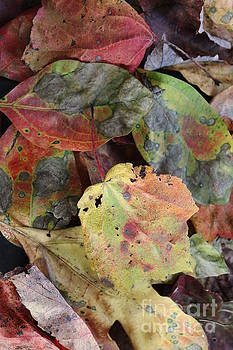 Beauti Fall by Anne Ditmars