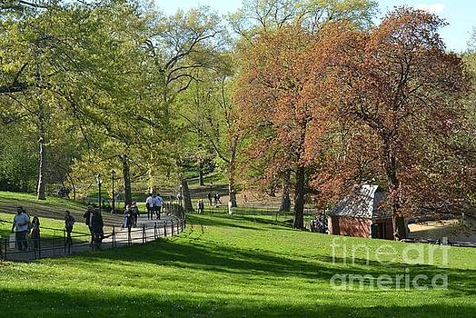 Beautiful Day in the Park - Central Park New York by Miriam Danar