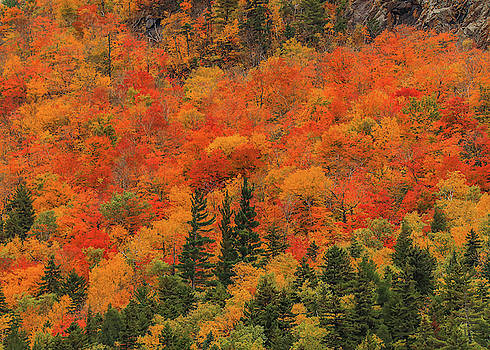 Beautiful Fall Foliage In New Hampshire by Dan Sproul