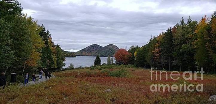Beautiful fall in the National Park Acadia by Olga Malamud-Pavlovich