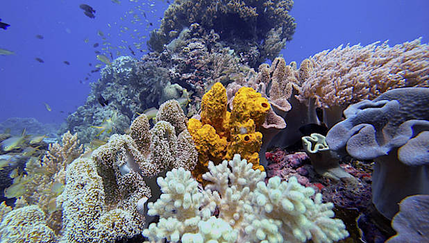 Beautiful Healthy Reef in Panglau by Paul Ranky