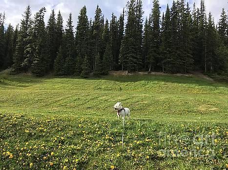Beautiful Miss Daisy In The Jasper National Park Alberta Canada by Art Sandi