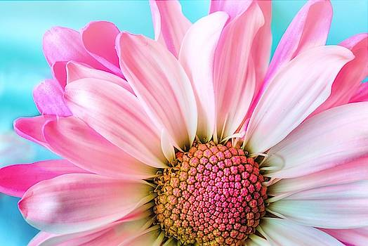 Beautiful pink flower by Top Wallpapers